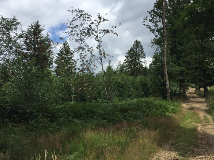 Gestion forestière