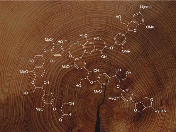 Chimie végétale et valorisation haute technologie : l'exemple de la lignine